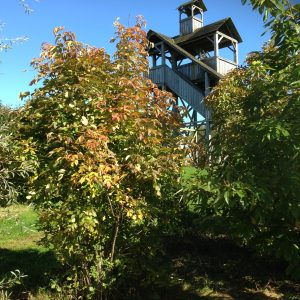 Boom van de maand: Oktober (Europese pimpernoot)